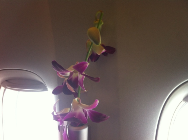 CX First Class Orchid